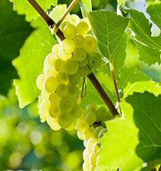 Weingut zum Pammer in der Wachau
