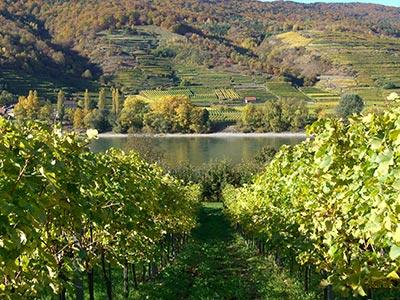 Weingarten in der Wachau mit einer Rebfläche von 2,5 ha